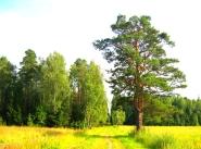 Коттеджный поселок Святозарово